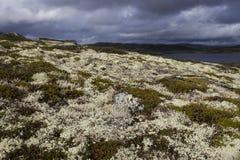 hardangervidda Νορβηγία Στοκ Φωτογραφίες