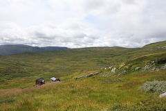 Hardangervidda Imagem de Stock Royalty Free