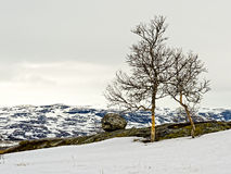 Hardangervidda Mountain Plateau in Snow, Norway Royalty Free Stock Images