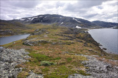 Hardangervidda, Norvège Image libre de droits