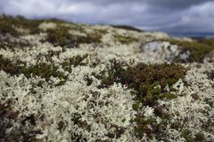 Hardangervidda plateau Stock Photography