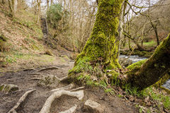 Hardcastle Crags path to steps Stock Photo