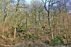 Hardcastle Crags, West Yorskhire. Winter trees in the woods at Hardcastle Crags Stock Images