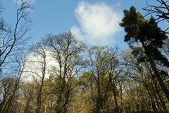 Hardcastle Crags, West Yorskhire. Winter trees in the woods at Hardcastle Crags Royalty Free Stock Photography