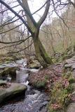 Hardcastlesteile rotsen, het Westen Yorskhire Royalty-vrije Stock Afbeeldingen