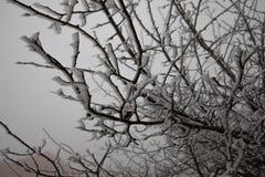 Harde rijp, het bevroren landschap van het sprookjesland van de boomwinter Mist en Mistachtergrond, natuurlijke boom bevroren bla stock foto's