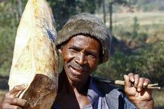 Harde werkende mens die een boomboomstam dragen - MADAGASCAR Stock Afbeeldingen