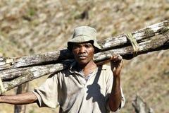 Harde werkende mens die een boomboomstam dragen - MADAGASCAR Royalty-vrije Stock Foto
