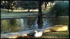 Hardin Simmons universitetsområdelandskap Royaltyfri Foto