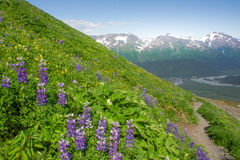 Harding Ice field Trail, Seward, Alaska. Exit Glacier and Harding Ice field Trail, Seward, Kenai Peninsula, Alaska Royalty Free Stock Photo