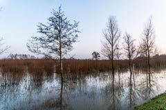 Hardinxveld,荷兰- 2018-01-14:树和杨柳小灌木林在被充斥的自然保护de Avelingen 库存图片