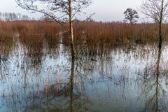 Hardinxveld,荷兰- 2018-01-14:树和杨柳小灌木林的反射在被充斥的河前陆 免版税库存照片