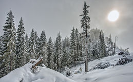 Sun Comes through Clouds in Snowy Alpine Forest Royalty Free Stock Photos