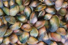 Hardshell musslor i vatten på den kinesiska marknaden Royaltyfria Foton