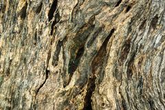 Hardwood background. Of stump texture in nature Stock Images