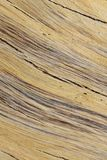 Hardwood Background and Texture - Colors of Detail and Contours. A close-up view of exposed wood from a False Camel Thorn tree, as seen in the wilds of Africa Stock Photo