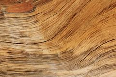 Hardwood Background and Texture - Curve of Contours and Color. A close-up view of exposed wood from a False Camel Thorn tree, as seen in the wilds of Africa Stock Photo