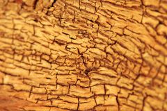 Hardwood Background and Texture - Golden Cracks of Beauty Royalty Free Stock Photography