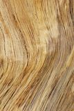 Hardwood Background and Texture - Golden Lines of Contours and Color. A close-up view of exposed wood from a False Camel Thorn tree, as seen in the wilds of Royalty Free Stock Image