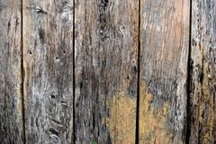 Hardwood. Background hardwood vertical and color of nature Royalty Free Stock Photo