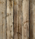 Hardwood  Stock Images