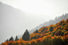 Hardwood forest in autumn Royalty Free Stock Images