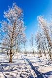 Hardwood Grove in Christmas. The concept of extreme tourism. Transparent cold air of forest. Crouching road in the snow. Hardwood Grove in Christmas. Sunny Royalty Free Stock Photo