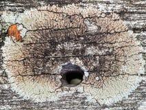 Hardwood Surface with Hole Royalty Free Stock Images