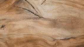 Hardwood texture from brown tree. can be used as background Royalty Free Stock Photo