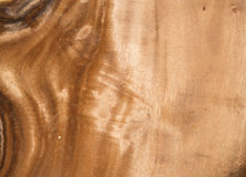 Hardwood texture from brown tree. can be used as background Stock Photography