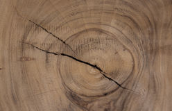 Hardwood texture from brown tree. can be used as background Stock Image