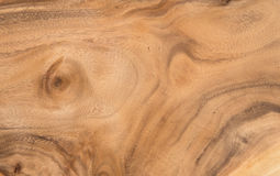 Hardwood texture from brown tree. can be used as background Royalty Free Stock Image