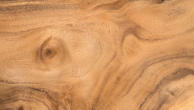 Hardwood texture from brown tree. can be used as background Royalty Free Stock Photography
