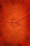 Hardwood Tree Cut Texture Royalty Free Stock Images