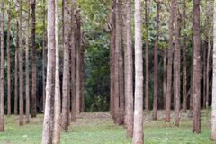Hardwood Trees in a Row Stock Photos