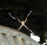 Hardworker蜘蛛 库存图片