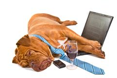 Hardworker caiu adormecido Fotos de Stock