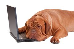 Hardworker dog with computer
