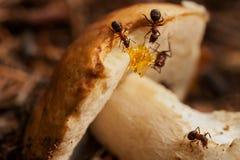 Hardworking mierenwerk met paddestoel groepswerk royalty-vrije stock foto's
