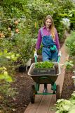 Hardworking young blond woman pushing a cart in the greenhouse stock photography