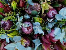 Hardy Australian Native Flora impresionante Fotos de archivo libres de regalías