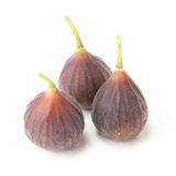 Hardy Chicago figs Royalty Free Stock Photography