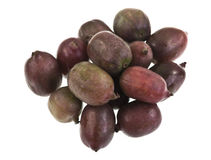 Hardy Kiwifruit. Red Hardy Kiwi (Actinidia arguta), a perennial vine which produces a small fruit resembling the kiwifruit Stock Photography