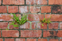 Hardy Plants Stock Image
