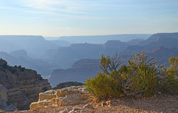 Hardy shrubs cling to the cliffs of Grand Canyon at the South Rim, Arizona Royalty Free Stock Photography