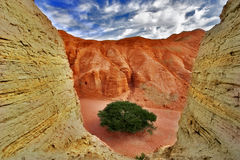 Hardy tree. Ancient mountains near to an oasis Ein-Bokek at coast of the Dead Sea Stock Image