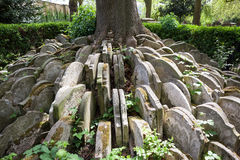 The Hardy Tree. In the churchyard of St Pancras Old Church in London, an ash tree is circled by gravestones Stock Photography