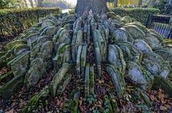 Hardys träd Royaltyfri Fotografi