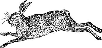 Hare. Vector image of the jumping hare