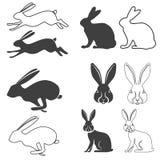 hare vektor illustrationer